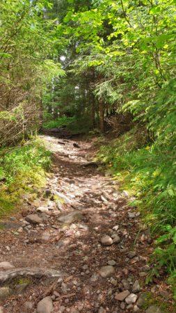 Steinige Wege durch den Wald des Schluchtensteig