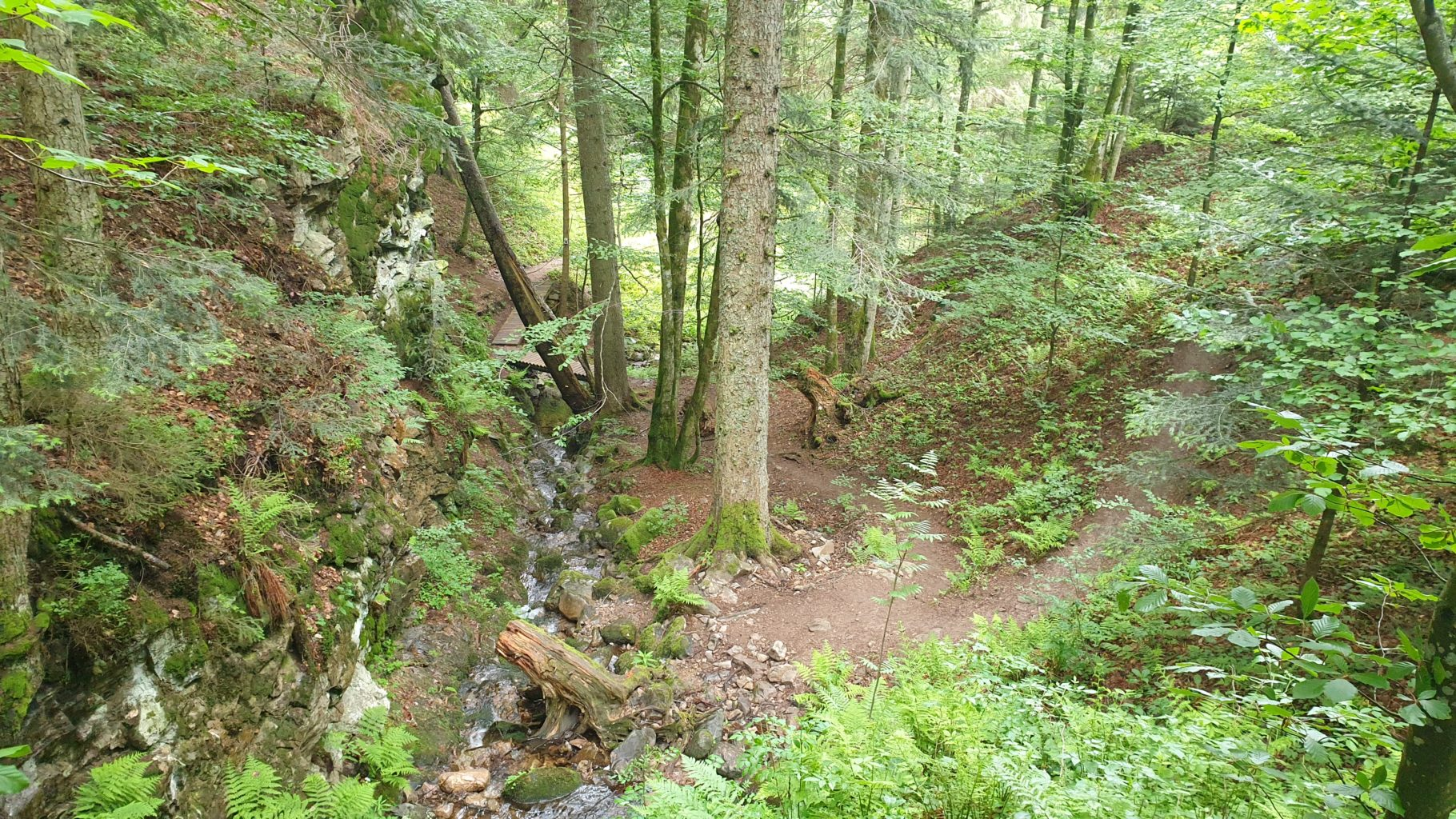 Wald auf dem Lebküchlerweg bei Todtmoos