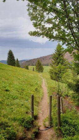 Schmale Pfade führen über saftig grüne Weiden des Bernauer Hochtal Steigs