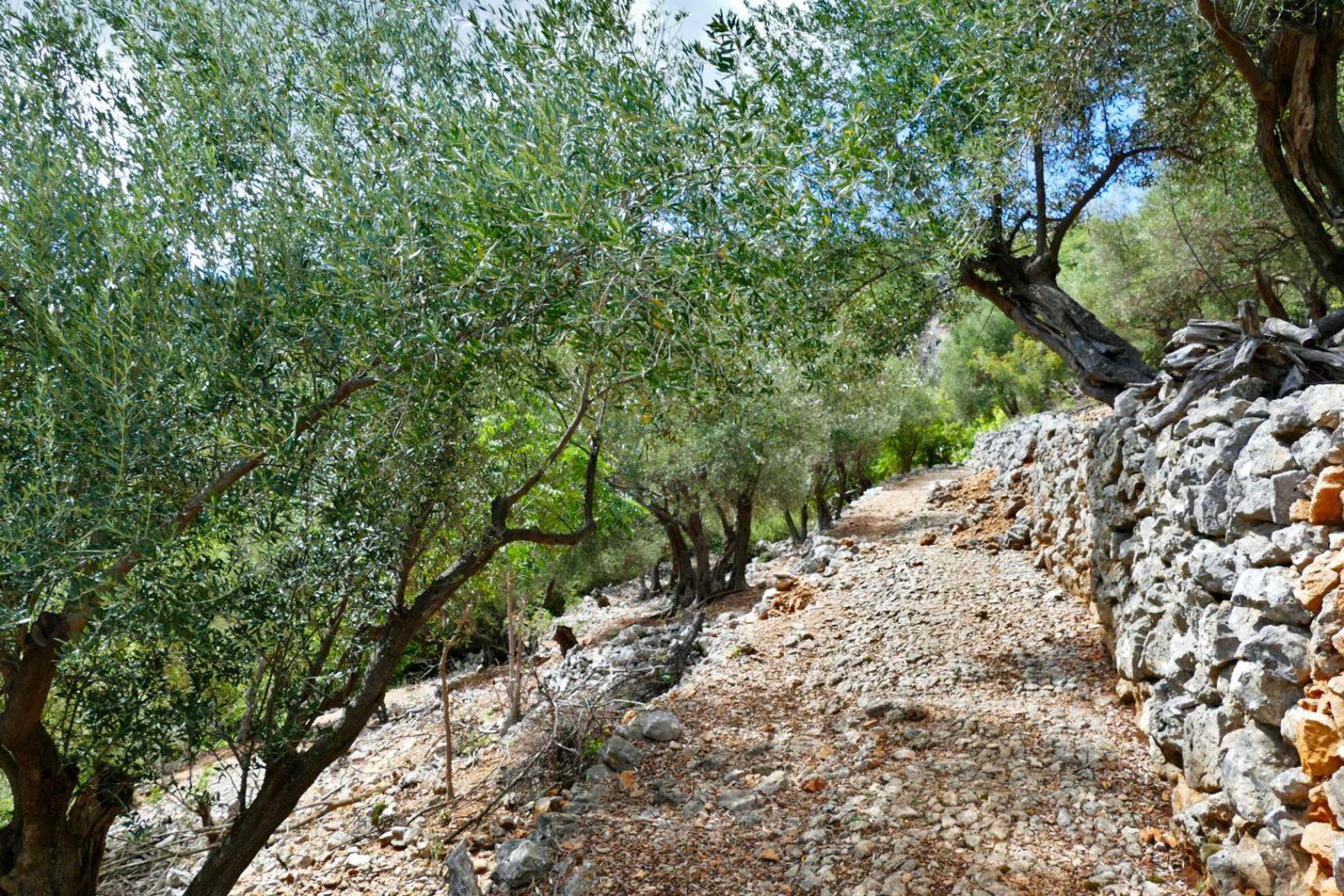 Weg an Trockenmauer bei Beli