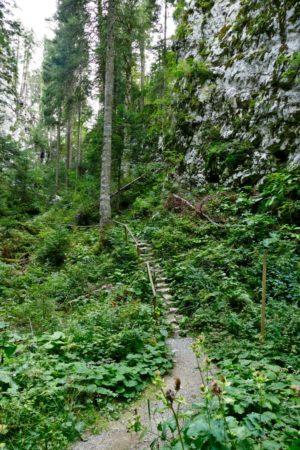 Pfad im Forest Park Golubinjak