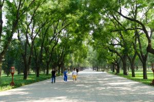 Parkanlage beim Himmelstempel in Peking