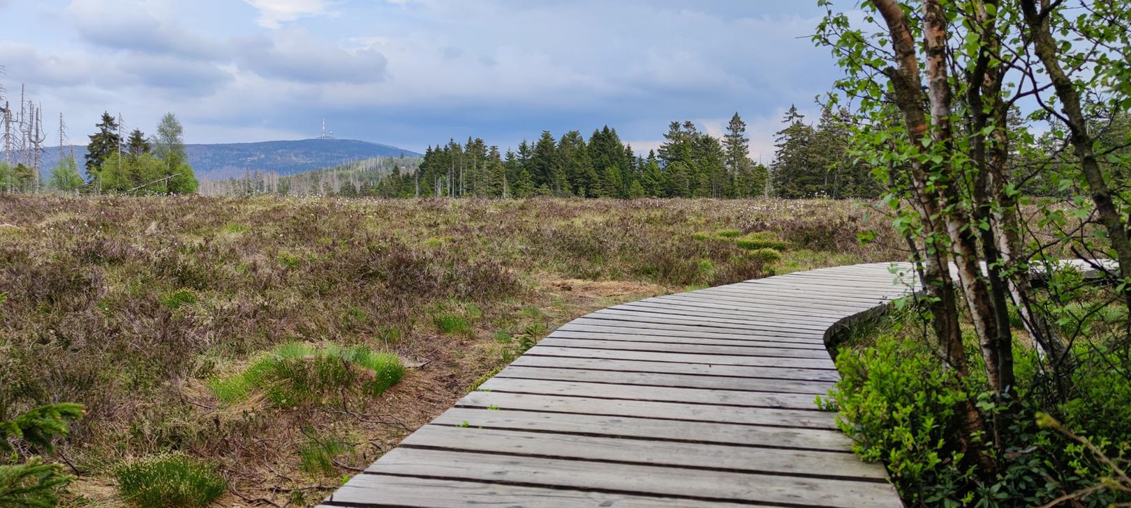 Großes Torfhausmoor mit Brocken im Hintergrund