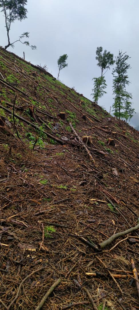 Eselstieg im Ilsetal mit Baumschnitt