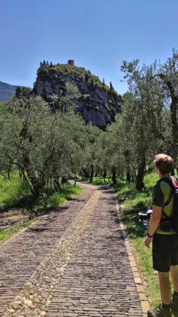 Olivenhain auf dem Weg zum Burgfelsen von Arco