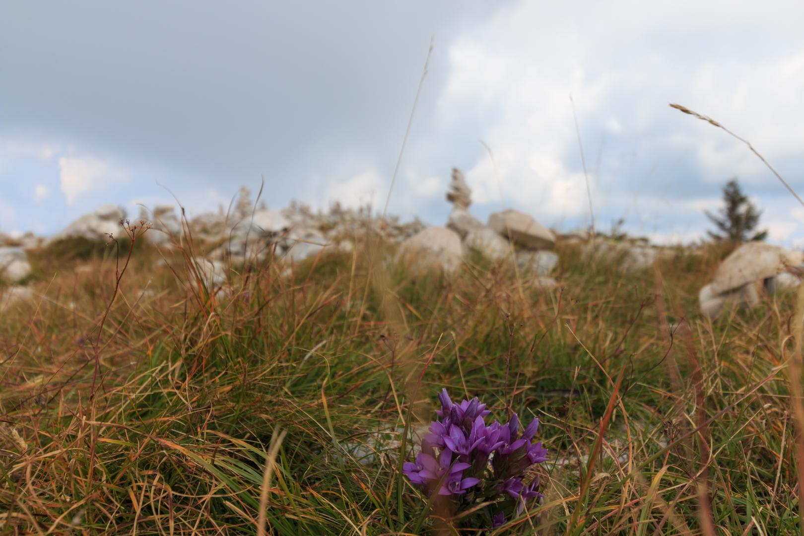 Steinmännchen auf dem Monte Baldo